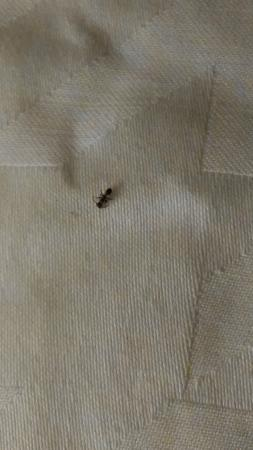 Homewood Suites by Hilton San Diego Airport - Liberty Station: ants in bed