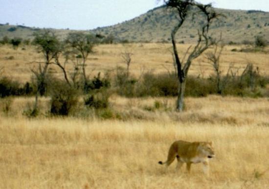 Masai Mara National Park Picture Of Mara River Maasai