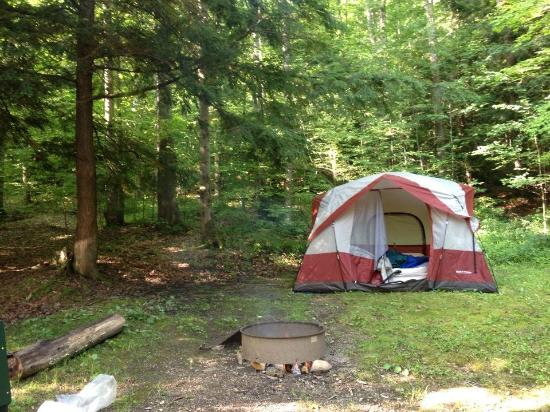 Allegheny National Forest: Our site
