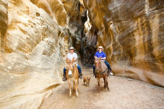 Mecham Outfitters: Willis Creek