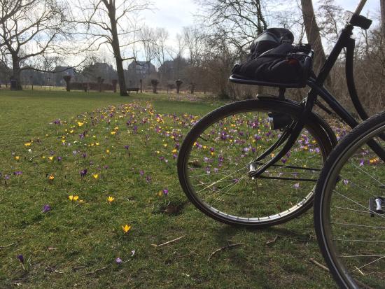 Amsterdam Black-Bikes: Black bikes in Vondelpark