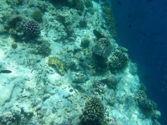 specifiek aanbod 100% echt skate schoenen Reef edge - Picture of Ellaidhoo Maldives by Cinnamon ...