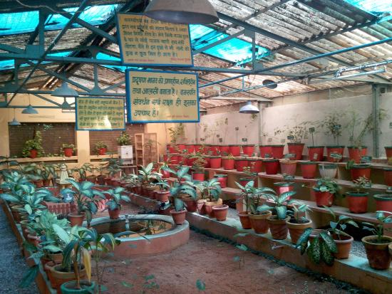 Shanti Kunj Gayatri Parivar Haridwar: Nursery