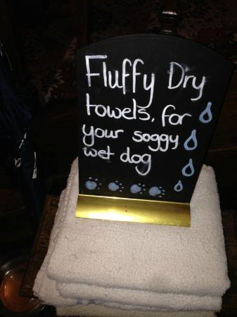 The Lion: Soggy dog towels