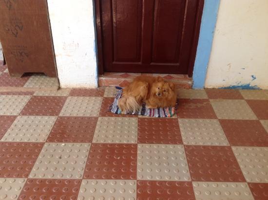 Gabriels Guest House: Foxy-The Cuty Pet Dog