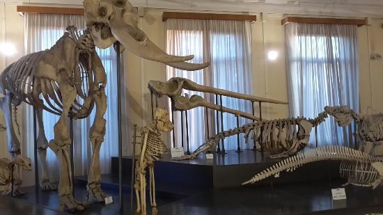 Museo Civico di Zoologia : La sala degli scheletri