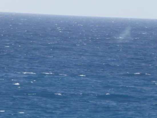 Golf Villas Mauna Lani: A whale spouting off the beach