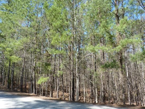 trees - Picture of Harbison State Forest, Columbia - TripAdvisor