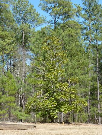 forest - Picture of Harbison State Forest, Columbia - TripAdvisor