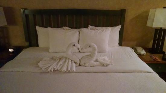 وايلدوود لودج: Part of the romance package, cute towel swans, champagne, cheese and fruit, nice whirlpool king 