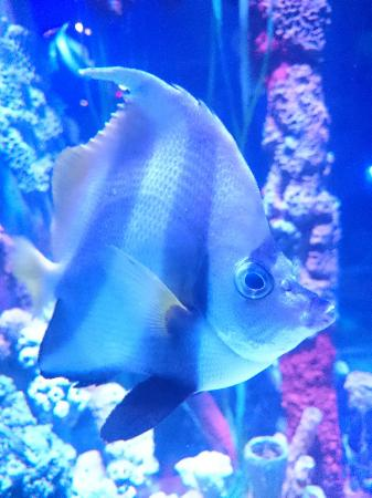 Huge tank - Picture of Sea Life Manchester, Trafford - TripAdvisor