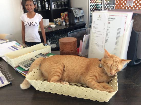 Hacienda Beach Restaurant: le chat de la maison