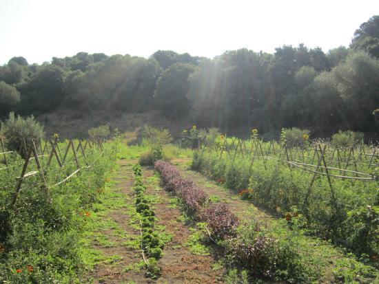 Corsica views photo de domaine de murtoli sart ne tripadvisor - Domaine de murtoli prix ...