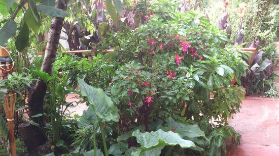 Kukuli Lodge: Jardim bem no centro da construção