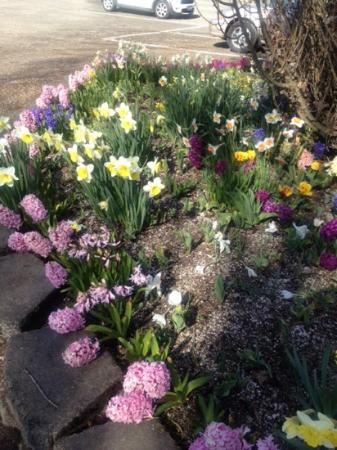 Wooden Shoe Tulip Farm : Smells heavenly