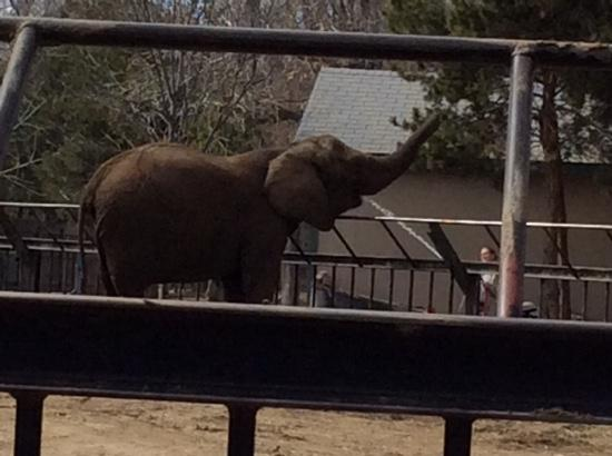 Getting a drink, Lee Richardson Zoo Elephant