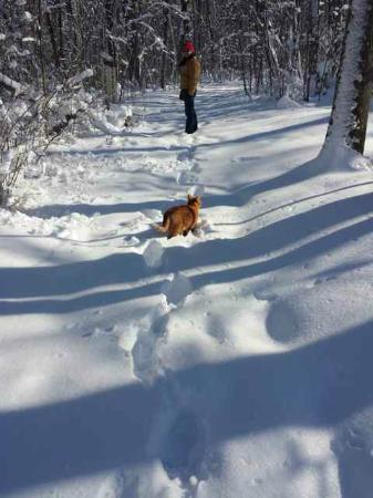 Murphin Ridge Inn: Our snowy walk (melted by Sunday)