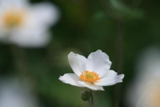 Bokka no Sato: 端正な花