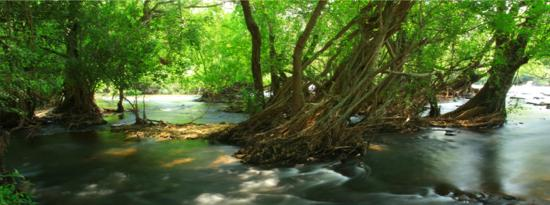 Natural Park Resort de Wang Thong: serenade river view
