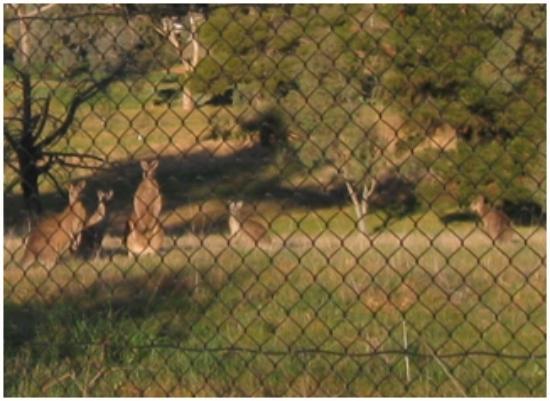 Hume Country Motor Inn: Wildlife