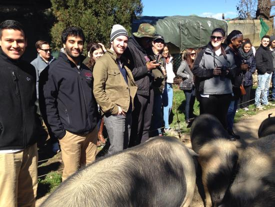 Degusta La Cinta Senese: At. John's students at the farm