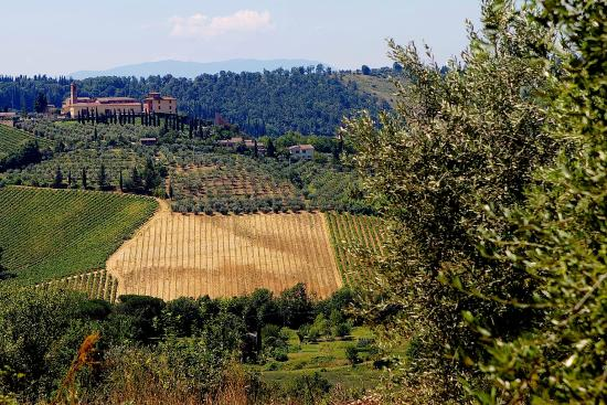 Pietrafitta Podere La Costa: The view to the local fields