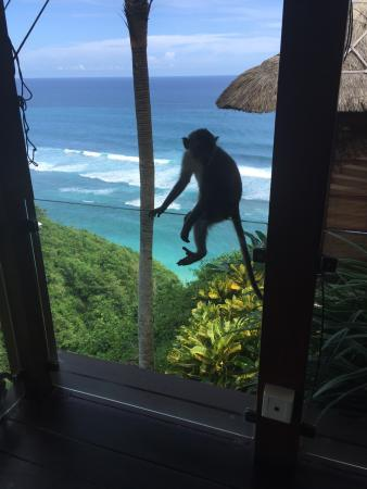 Karma Spa at Karma Jimbaran: Beautiful views from the day spa complete with inquisitive monkeys