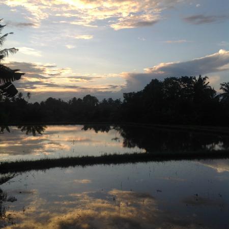 vue des rizières autour de la maison, au petit matin