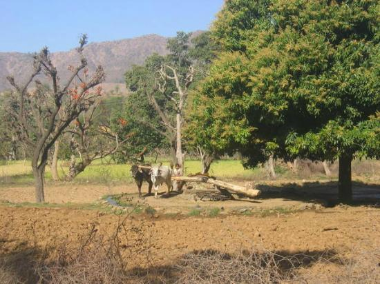 Jaipur, India: Off the main tourist highway with Magan