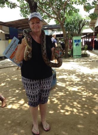 Bali Turtle Conservatory: taped up snake