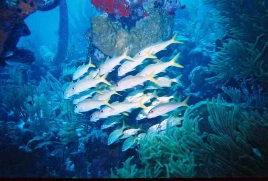 Villa On Dunbar Rock: Sea Life 3