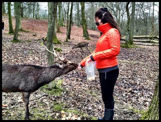 Aarhus, Dinamarca: feeding the deer