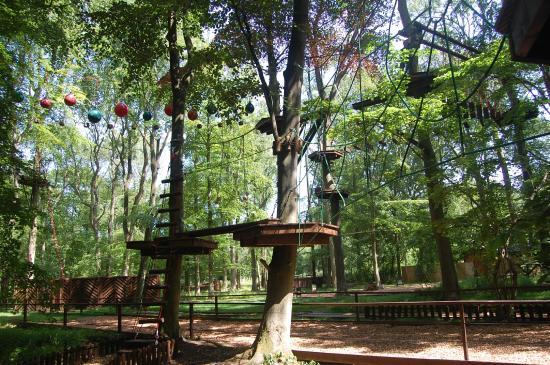 Tree Ninja Ltd