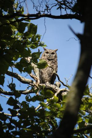 Malvern Manor Country Guest House: Resident Owl