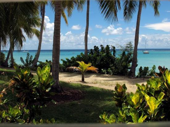 La Cocoteraie : beach