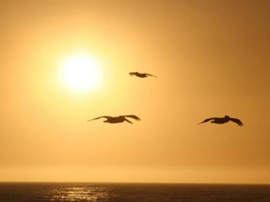Monterey Tides, a Joie de Vivre hotel: Monterey Sunset