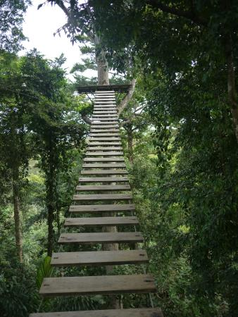 Bastimentos Sky Zipline Canopy Tour: Stairs up to the first zip line