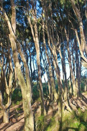 Hawaii Island Retreat at Ahu Pohaku Ho`omaluhia: forest