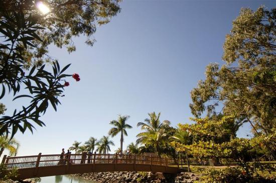 Colonial Palms Motor Inn: Bridge