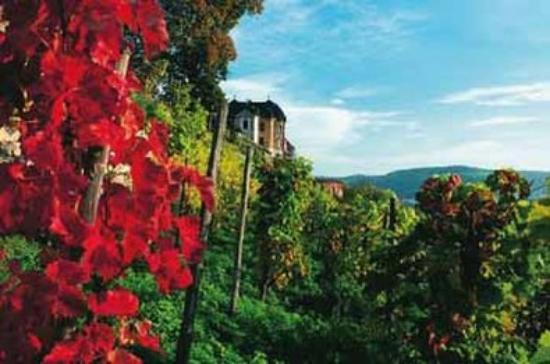 Best Western Hotel Jena: Area Attraction