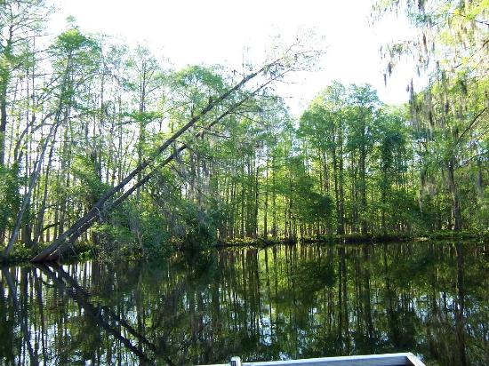 Airboat Wildlife Adventures: Simply beautiful