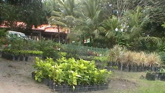 Foto de parque tem tico bosque macuto barquisimeto for Vivero del parque