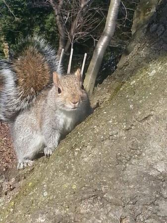 Tidal Basin: Super friendly squirrels here!