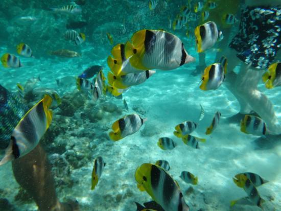 Le Taha'a Island Resort & Spa: Jardim de Corais do Hotel