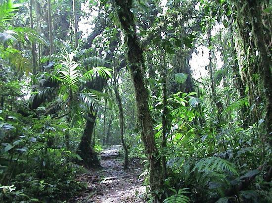 Bill Beard's Costa Rica : Monteverde Cloud Forest Preserve