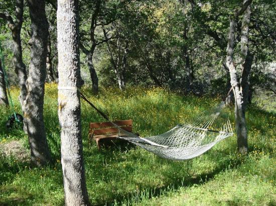 Residence Bellevue Guesthouse: hammock