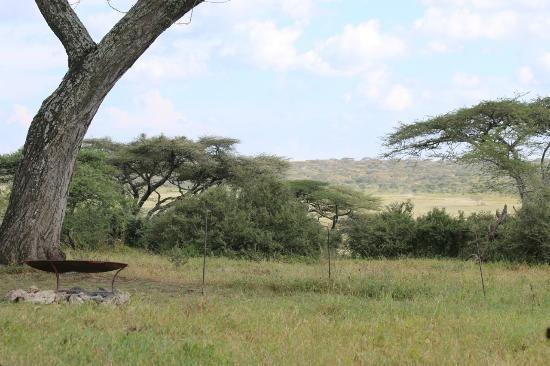 Lemala Ndutu Tented Camp: Bush TV