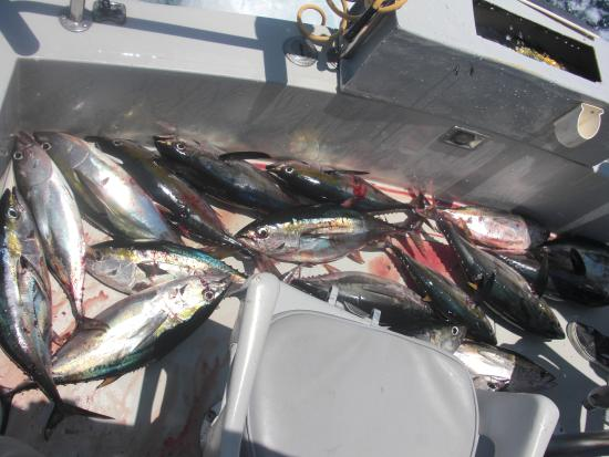 Guerita Sportfishing: July 2009