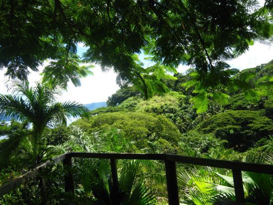 Daku Resort : The nearby Flora Tropical Gardens