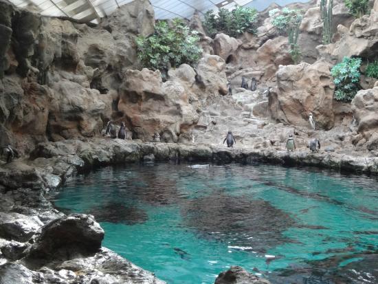Orcashow - Picture of Loro Parque, Puerto de la Cruz - TripAdvisor